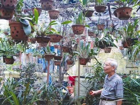 Culture des orchidees au Vietnam