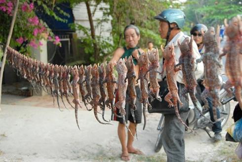 marche d'insecte au Vietnam_6