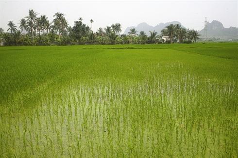 Village de Yen Duc