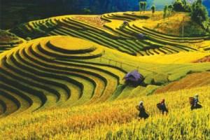 rizières en gradins Mu Cang Chai