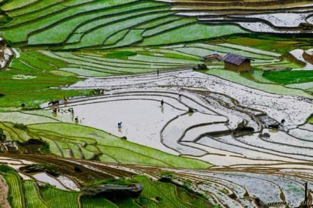 rizieres-en-terrasses-a-Y-Ty