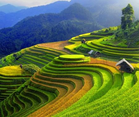 les-rizieres-en-terrasses