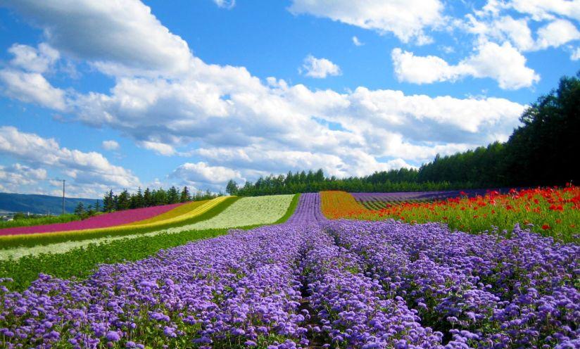 ville da lat vallee fleurs.jpg