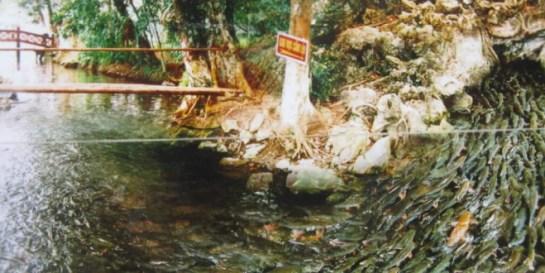 ruisseau des poissons geniaux