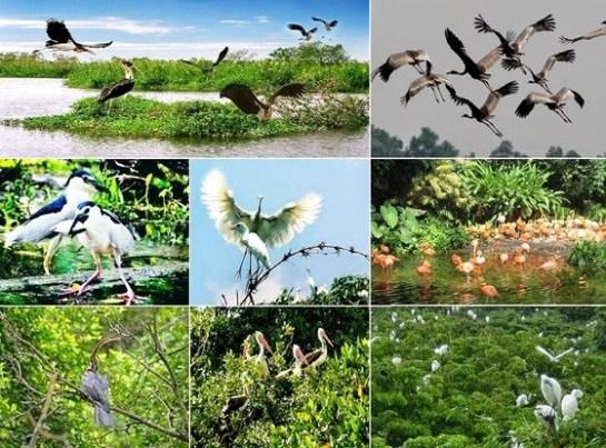 visite ben tre delta du mekong oiseaux.jpg