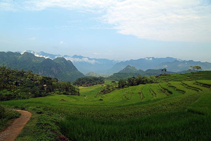 les-belles-rizieres-toute-verte-au-mois-de-juillet-au-Nord-du-Vietnam.jpg