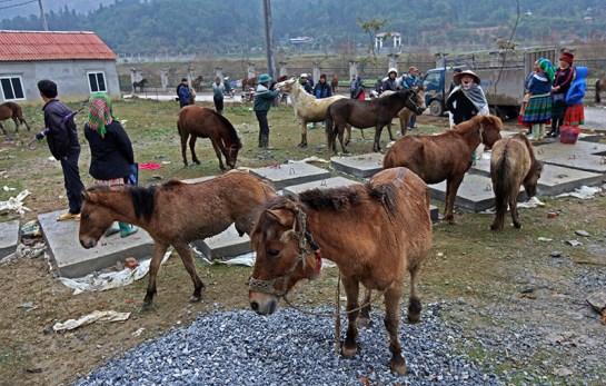 marches ethniques nord vietnam chevaux.jpg