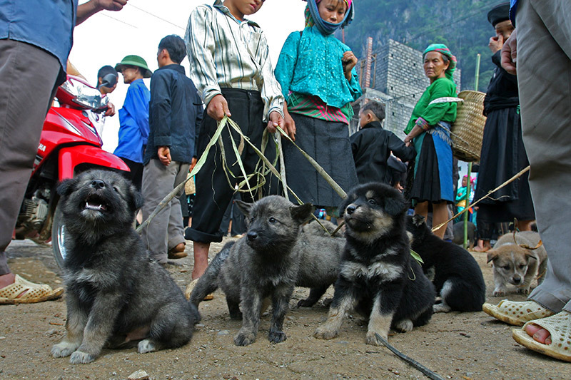 visite marches ethniques nord vietnam chien.jpg