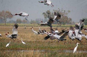 Le sanctuaire d'oiseaux de Ngoc Hien