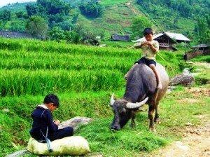 Ethnie Hmong Sapa