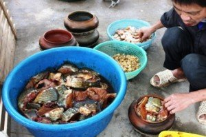 un plat Carpe au caramel d'un village de Dai Hoàng