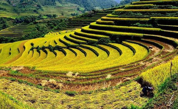 Visite Lao Cai et ses incontournables