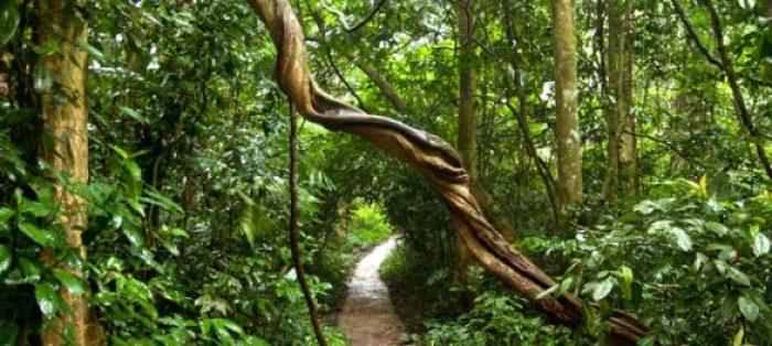 Parc national de Cuc Phuong à Ninh Binh