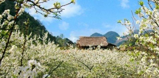 Le charme du plateau Môc Châu au Nord Ouest