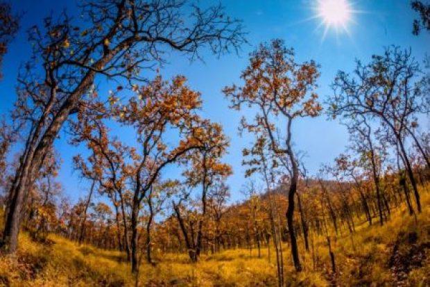 parc national de Yok Don