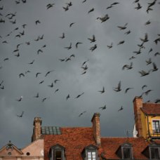 Birds in the sky over the Old Town in Warsaw.