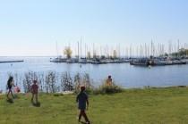Shoreline Clean Up 076-800