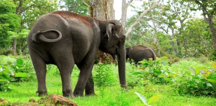 Bandipur National Park Wildlife