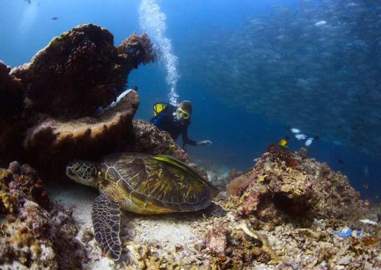 Snorkel Turtle Town - Maui Travel Guide