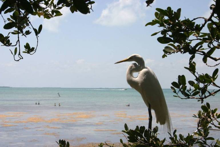 Florida keys birding - Californias Birds Fests