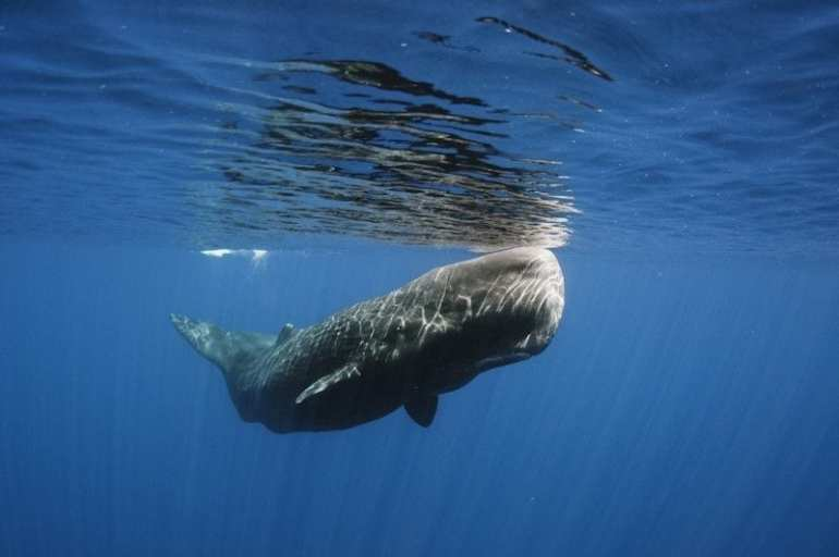 Madeira's waters are a paradise for whales