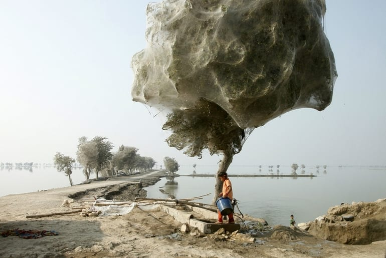 Spiderweb cocooned trees in Pakistan - 15 Craziest Things In Nature