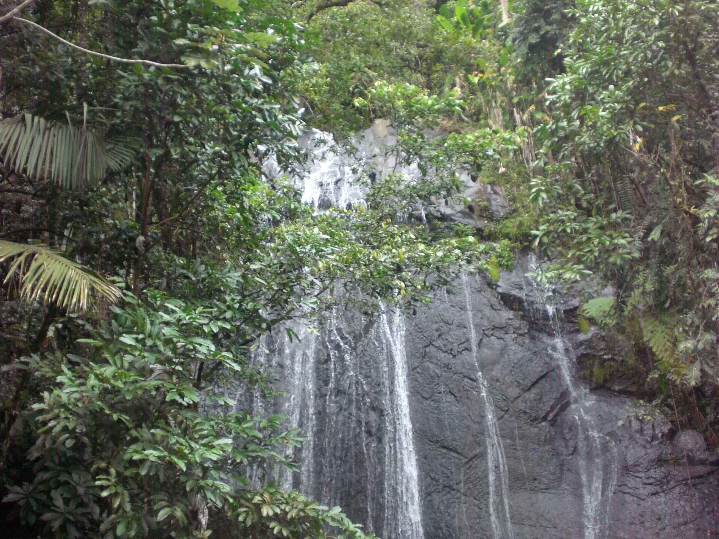 Puerta Rican Rainforest