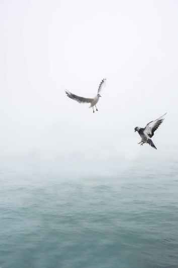 pigeon and seagull flying above body of water