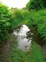 Drassig paadje langs het kanaal
