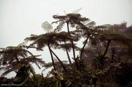 Capesterre-Belle-Eau - Chutes du Carbet