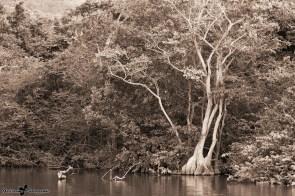 Deshaies-Grande-Anse