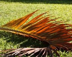Palme couleur Sucre