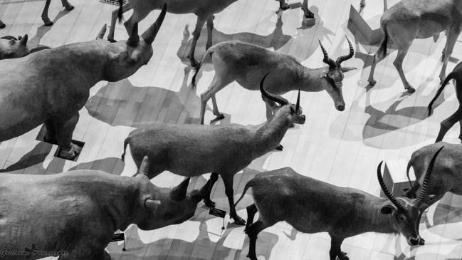 Grande galerie de l'Évolution - Paris