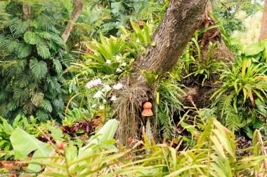 nature_Guadeloupe-2019-101