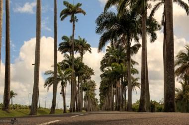nature_Guadeloupe-2019-131