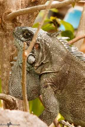 nature_Guadeloupe-2019-143