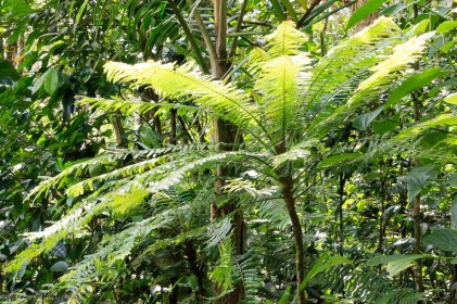 nature_Guadeloupe-2019-38