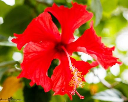 nature_Guadeloupe-2019-75