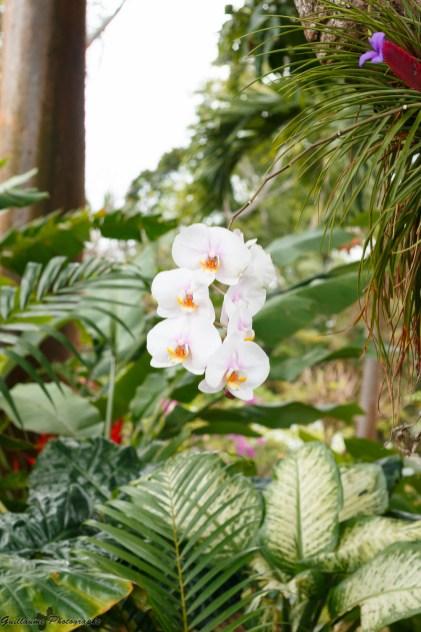 nature_Guadeloupe-2019-86