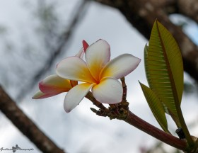 nature_Guadeloupe-2019-92