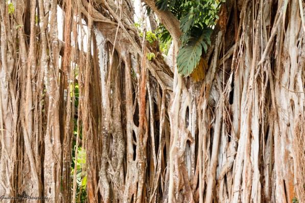 nature_Guadeloupe-2019-94