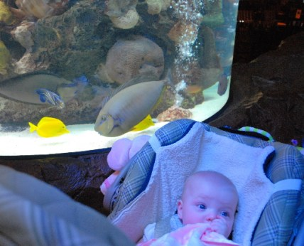 There are so many fish and the aquarium goes over my head!