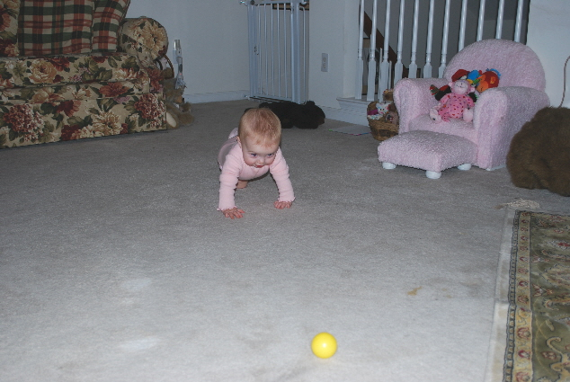 Hmmmm.... one cute little yellow ball.... I want it!