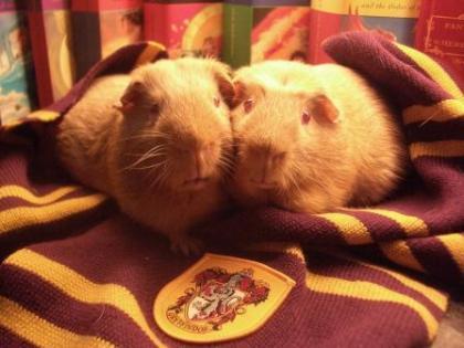 George & Fred