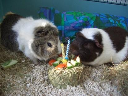 Victor and Hugo have a birthday haycake