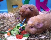 Fred and George with a lavender cucumber cake
