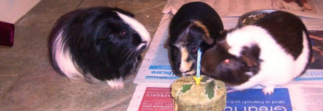 Humphrey, Hector and Hugo with Hector's cake