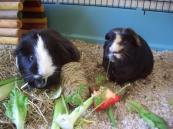 Humphrey and Hector