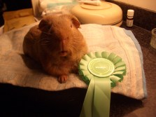George with his rosette