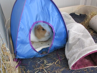 Kevin in the tent